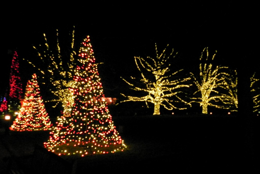 my life in mommyland we love longwood gardens - Longwood Gardens Christmas Lights